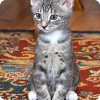 Adopt A Pet :: MG - Davis, CA