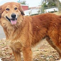 Adopt A Pet :: Iris - BIRMINGHAM, AL