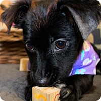 Adopt A Pet :: ASTRID (video) - Los Angeles, CA