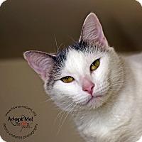 Adopt A Pet :: Phoebe - Lyons, NY