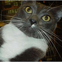 Adopt A Pet :: Cary Grant - Watkinsville, GA