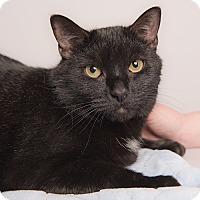Adopt A Pet :: Oakley - Wilmington, DE
