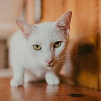 Adopt A Pet :: Jax - Statesville, NC