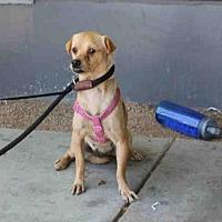 Adopt A Pet :: MAYO - Los Angeles, CA
