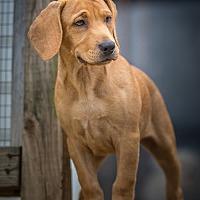 Adopt A Pet :: Les - Bristol, TN