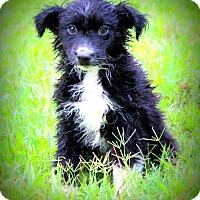 Adopt A Pet :: Juno - Glastonbury, CT