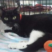 Adopt A Pet :: Sarah - Palm Harbor, FL