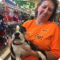 Adopt A Pet :: Carlie - Weatherford, TX