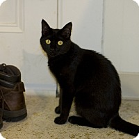 Adopt A Pet :: Penny - Manchester, CT