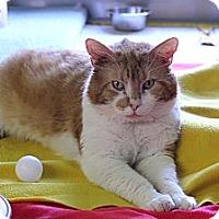 Adopt A Pet :: Conan - Chicago, IL