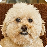 Adopt A Pet :: Frazier - La Costa, CA