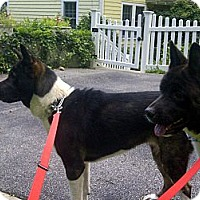 Adopt A Pet :: BELLA -- Courtesy Post - East Amherst, NY