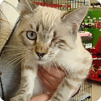 Adopt A Pet :: Yum Yum M - Sacramento, CA