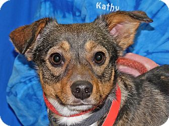 Terrier (Unknown Type, Small) Mix Dog for adoption in Spokane, Washington - Henry