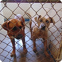 Adopt A Pet :: ARIEL AND TIANA - Cleveland, MS