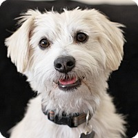 Adopt A Pet :: Sidney - See my updated video! - Los Angeles, CA