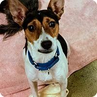 Adopt A Pet :: Suzie - Woodstock, GA