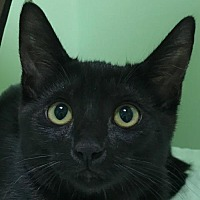 Adopt A Pet :: Hope - Auburn, CA