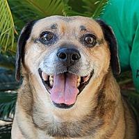 Adopt A Pet :: Corky - Las Vegas, NV