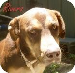 Shepherd (Unknown Type) Mix Dog for adoption in Georgetown, South Carolina - Rivers