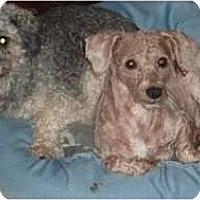 Adopt A Pet :: Tally & Maurice - Raleigh, NC