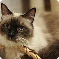 Adopt A Pet :: Dashaa - Canoga Park, CA