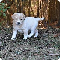 Adopt A Pet :: Ranger - South Dennis, MA