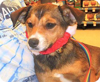 Terrier (Unknown Type, Medium)/Catahoula Leopard Dog Mix Puppy for adoption in Godley, Texas - Vermilion