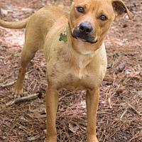 Adopt A Pet :: Kylie - Big Canoe, GA
