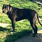 Adopt A Pet :: Marco - Denton, TX