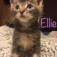 Adopt A Pet :: Ellie - Trevose, PA