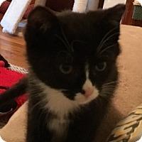 Adopt A Pet :: Little Man - Delmont, PA