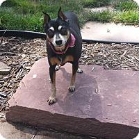 Adopt A Pet :: Belle aka Bellerina - Omaha, NE