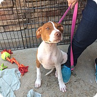 Adopt A Pet :: Hugh - Hohenwald, TN