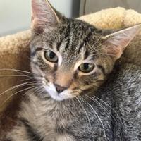 Adopt A Pet :: Sarenna - Bartlesville, OK