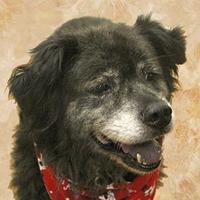 Adopt A Pet :: Rusty - Cincinnati, OH