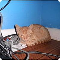 Adopt A Pet :: Rue - Warren, MI