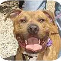 Adopt A Pet :: Romeo - Hoffman Estates, IL