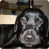 Adopt A Pet :: Zoe - New Boston, NH