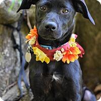 Adopt A Pet :: Georgia - Baton Rouge, LA