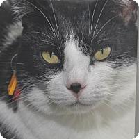 Adopt A Pet :: Tammi - Venice, FL
