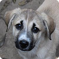 Adopt A Pet :: Merida - PENDING - in Maine - kennebunkport, ME