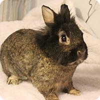 Adopt A Pet :: Ralphie - Hillside, NJ