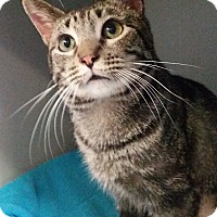 Adopt A Pet :: Dodge - Sarasota, FL