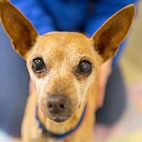 Adopt A Pet :: Pearl - Berkeley, CA