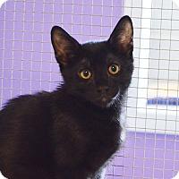 Adopt A Pet :: Triton - Lincoln, NE