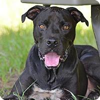 Adopt A Pet :: 10311877 RUDY - Brooksville, FL