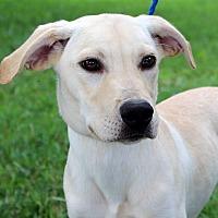 Adopt A Pet :: Gaston - Southbury, CT