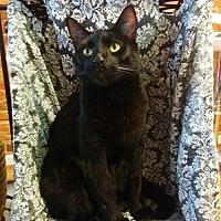 Adopt A Pet :: Inigo Montoya - Owings Mills, MD