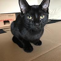 Adopt A Pet :: Miko - Toronto, ON